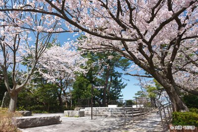 【写真を見る】県内で唯一「さくら名所100選」に選ばれた花見の名所「西公園の桜」