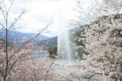 約14kmにわたり桜が咲き誇る熊本県下有数の桜の名所「市房ダム湖周辺の桜」