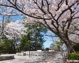 """お花見シーズン到来!今、注目されている""""九州の桜名所""""ベスト5"""