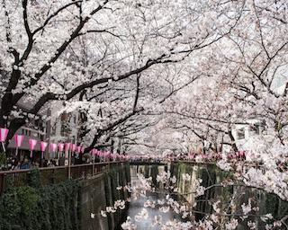 「和酒フェスin中目黒」で花見と日本酒を楽しもう!