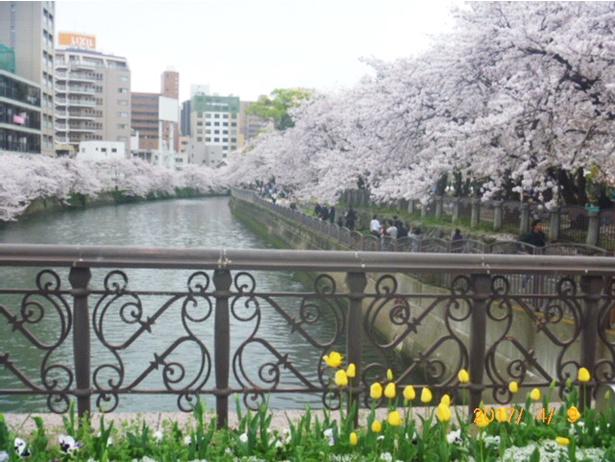 福岡天神さくらまつり / 開催中~4月8日(日) ライトアップされた桜を愛でながらフードとドリンクを楽しむ