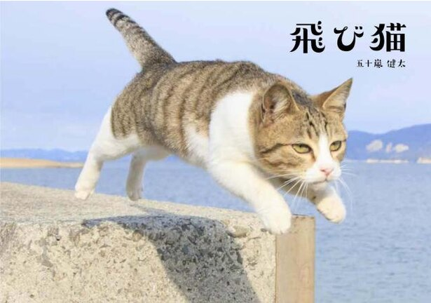 飛び猫写真展 in イオンモール福岡 / 3月30日(金)~4月7日(土)飛び猫など120点の写真展示