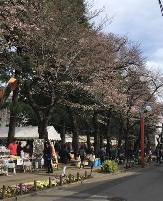 桜並木を散策して春の訪れを感じよう