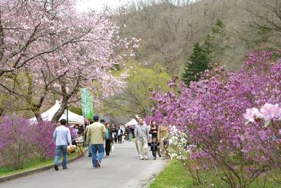 祭り当日は花の鑑賞のほかに、出店や催しも楽しめる