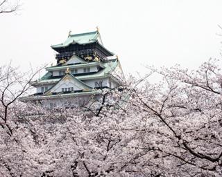 春の植木市の露店の背後にも桜。店頭に並ぶさまざまな花と桜をあわせて楽しもう