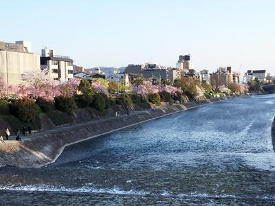 三条大橋から見た鴨川沿い