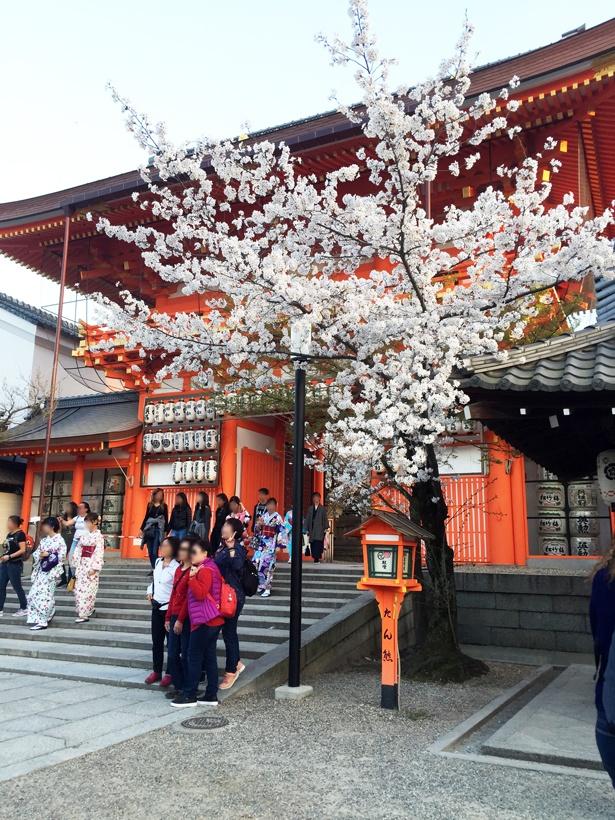 南楼門。朱塗りの門にソメイヨシノが華を添える