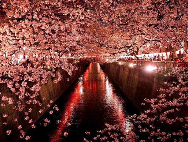 【写真を見る】幻想的な目黒川のライトアップ
