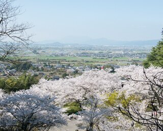 福岡・桜速報!久留米で一番の桜の名所「発心公園」