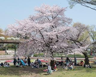 福岡・桜速報!動物たちも可憐な桜にうっとり「福岡市動植物園」