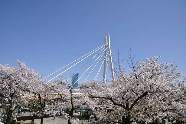 大川にかかる斜張橋の川崎橋