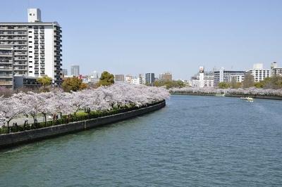 川崎橋から北側を一望する。どこまでも続く桜並木が美しい