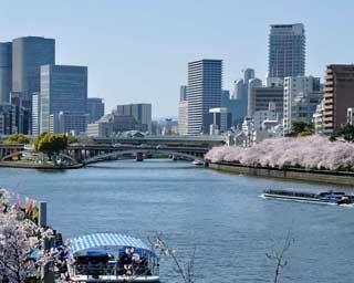 大阪の桜、上から見るか?下から見るか?毛馬桜之宮公園から、現地レポ