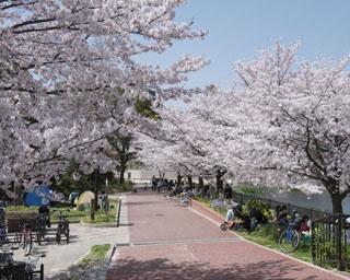 福岡・桜速報!遊具や広いグラウンドもあり。ファミリーに人気の「野間大池公園」