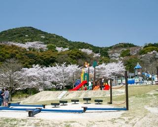 佐賀・桜速報!金立SA直結でアクセス良好。遊具&BBQ場完備の「金立公園」