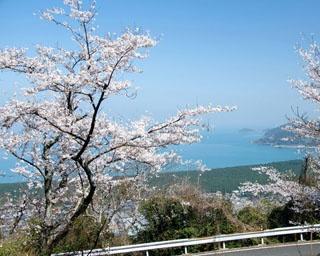 佐賀・桜速報!唐津湾をバックに美しい桜が見られる「鏡山」