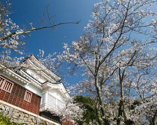 長崎・桜速報!名城・平戸城が春色に染まる「亀岡公園」