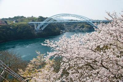新西海橋、渦潮、桜が見られるのは西海橋上の駐車場側