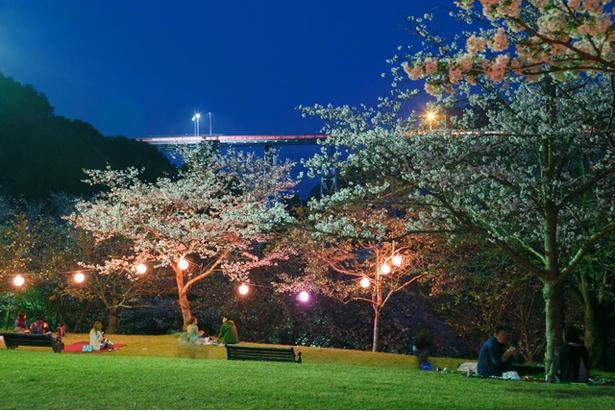 【写真を見る】ライトアップも行われる芝生広場。近くの売店には、無料の貸しゴザも用意