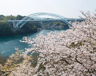 長崎・桜速報!ダイナミックな渦潮と共に多彩な桜を愛でる「西海橋公園」
