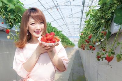 横浜市泉区で唯一のイチゴ狩りスポット「ゆめが丘農園」