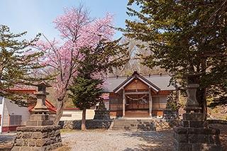 富士と桜の最強タッグが見られる神の絶景とは