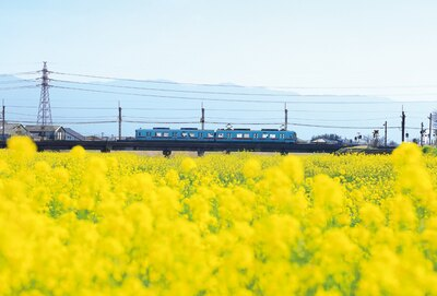 小石原川の菜の花。4月上旬までが見ごろだ