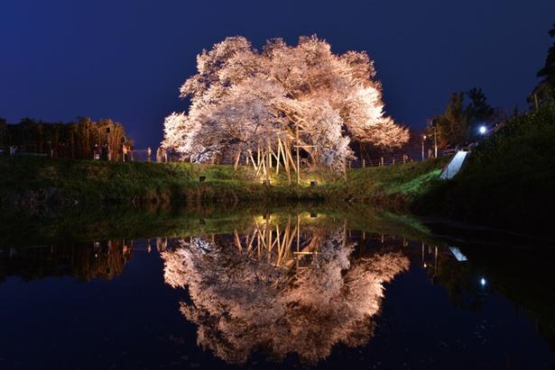 水面に写し出される孤高の百年樹