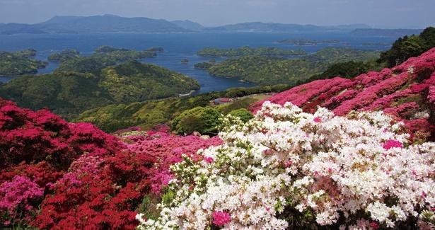長串山公園のツツジ。2018年は4/7(土)~5/6(日)に「つつじまつり」が開催される