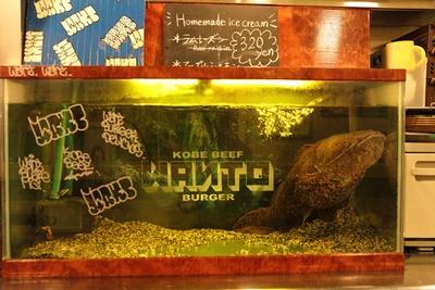 アマゾンの熱帯魚はカウンターから見られる