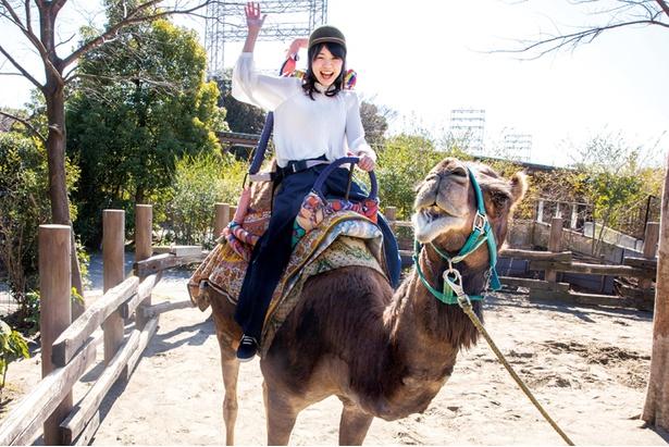 ラクダに乗る貴重な体験ができる!