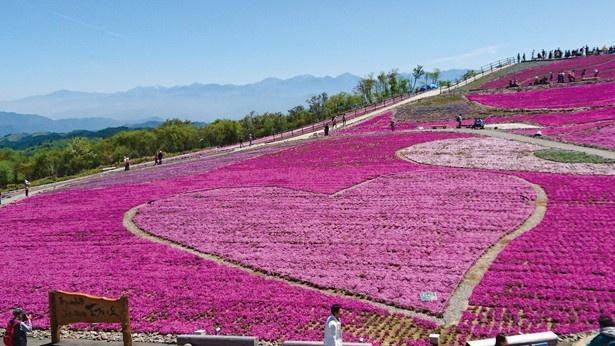 【画像を見る】芝桜の丘にあるみはらし台からは、花畑の中に大きなハートマークが!