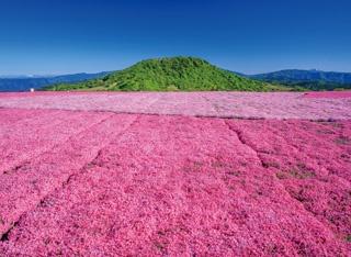 天空に広がる花畑で全身に春を感じる!茶臼山高原