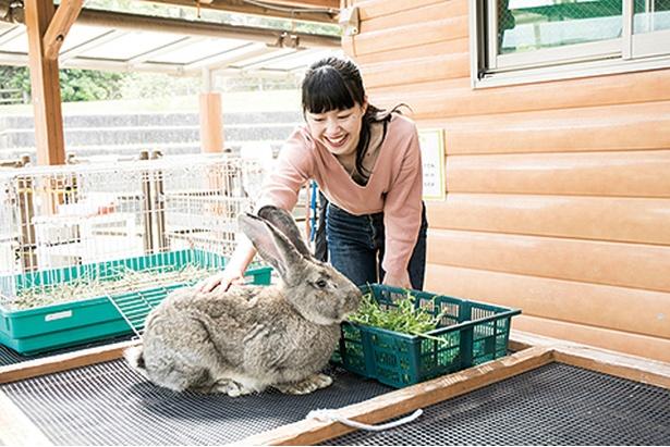 海の中道海浜公園 / 園内の「動物の森」でかわいい動物と触れ合おう!