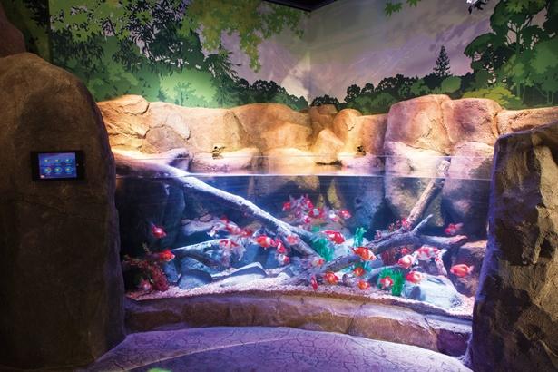木曽川をイメージしたゾーン。ソウギョやタモロコなどの淡水魚のほか、愛知県弥富市の金魚も展示される