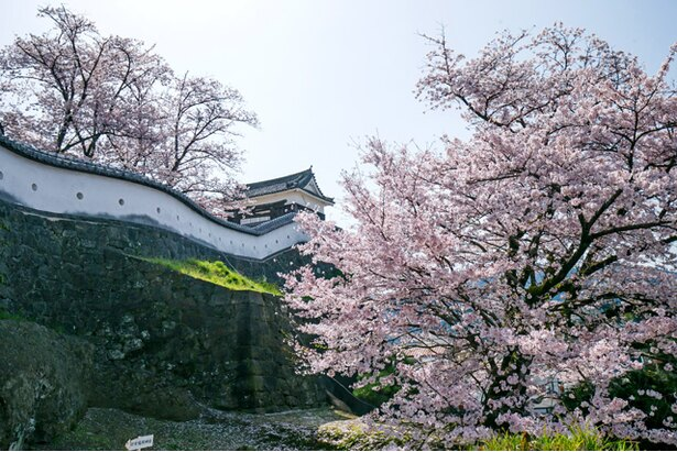 臼杵城の桜2018