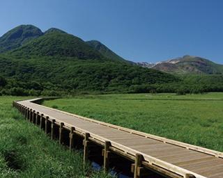 「タデ原湿原」では1周約2.5kmのコースを用意。湿原や森林にはホオジロやセッカなどの野鳥もいる