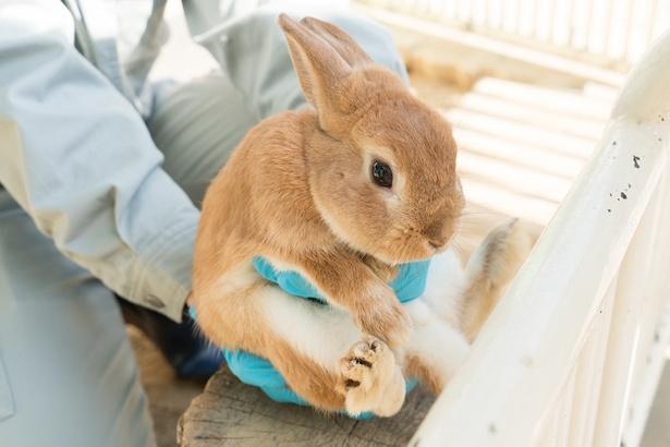 福岡市動物園/ウサギ