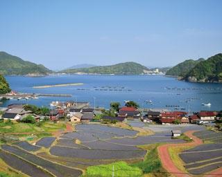 約200枚の水田がきれい! 四季折々に美しい、空と海×棚田の共演(福井「日引の棚田」)