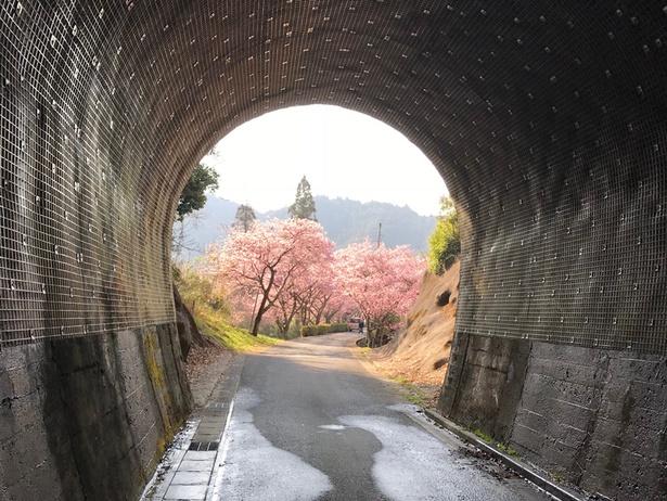 トンネルを抜けるとそこは…!?