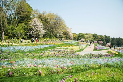 横浜市内産のパンジーなど約100品種・約30万本の花々が咲く「里山ガーデン」