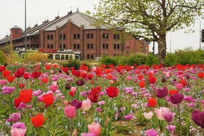 「みなとエリア」の新港中央広場には約3万5,000本のチューリップが咲く