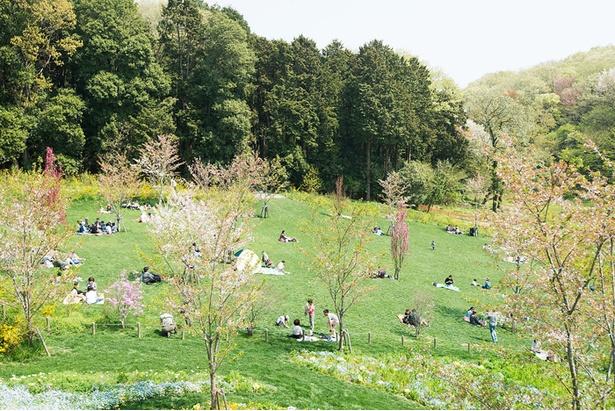 ピクニック広場で弁当を食べるのもおすすめ。ふかふかの芝生は裸足で歩くのも気持ちいい!