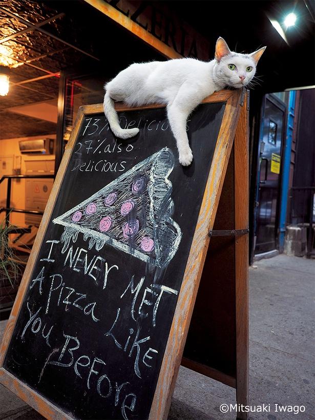 【写真を見る】ニューヨークのピザ屋の看板ネコ「ホワイトスライス」
