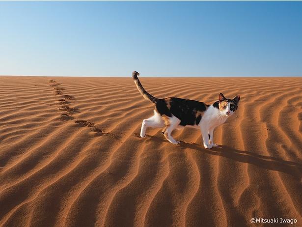 世界60ヵ所以上の撮影地から厳選された16地域の個性溢れるネコたちの作品を約170点展示