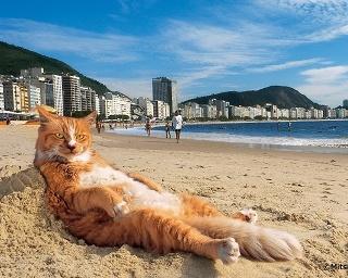 世界のネコ作品約170点!写真展「岩合光昭の世界ネコ歩き2」開催