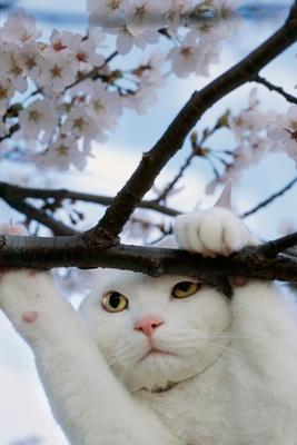 【写真を見る】日本のネコたちを中心とした写真約70点を展示 第40回特別企画展「岩合光昭ミニ写真展 ねこ歩き 日本編」/ 開催中~6月17日(日)