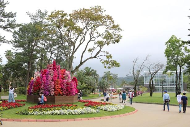約60品種のブーゲンビリアが色鮮やかに咲き誇る ブーゲンコレクション2018 / 4月21日(土)~5月13日(日)