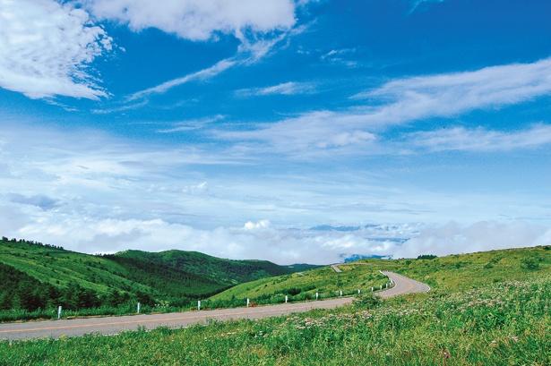 雲上の道を縫うように走る車山高原はビーナスライン屈指の人気ルート!