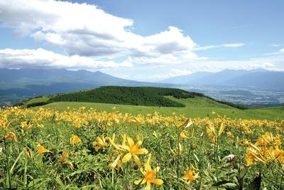 ユリ科のニッコウキスゲは7月に咲く夏の花